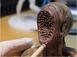 3D Printing Creatures: Maya, Mudbox and Zortrax M200
